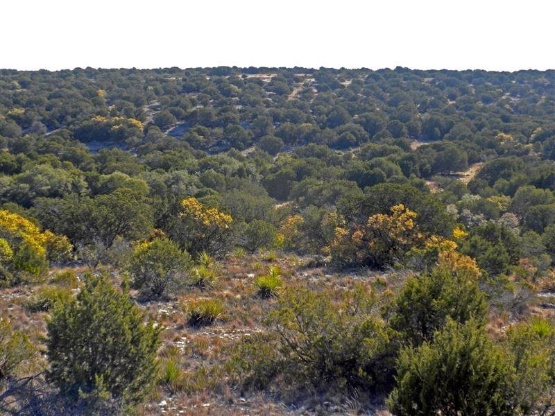 Texas Ah Property Type