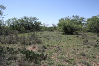Runnels County, Texas (4)