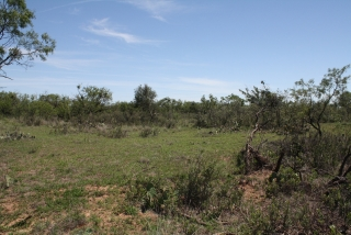 Runnels County, Texas (5)