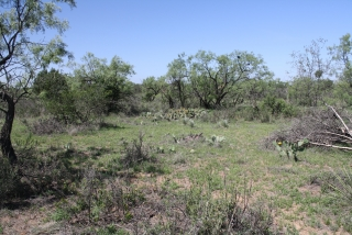 Runnels County, Texas (6)
