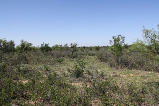 Runnels County, Texas (7)