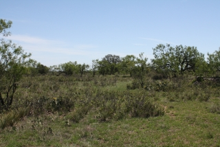 Runnels County, Texas (8)
