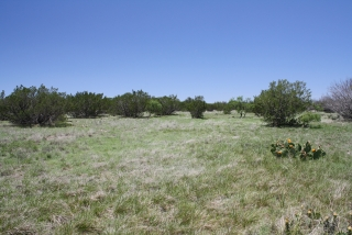 Schleicher County, Texas (2)