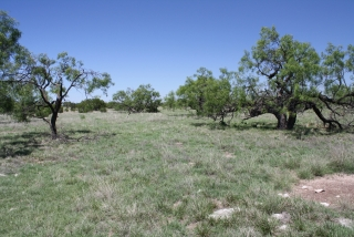 Schleicher County, Texas (6)
