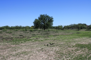 Tom Green County, Texas (5)