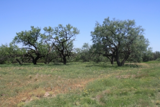 Sterling County, Texas (10)