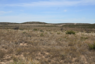 Sterling and Coke Counties, Texas (9)
