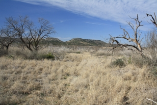 Coke County, Texas (8)