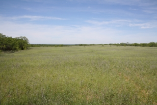 Mitchell County, Texas (2)