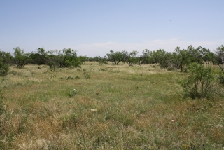 Coke County, Texas