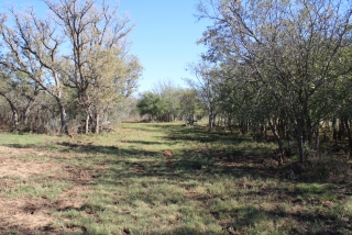 Mitchell County, Texas (6)